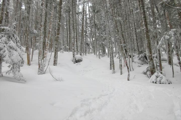 南沢樹林帯