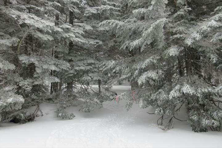 行者小屋への樹林帯
