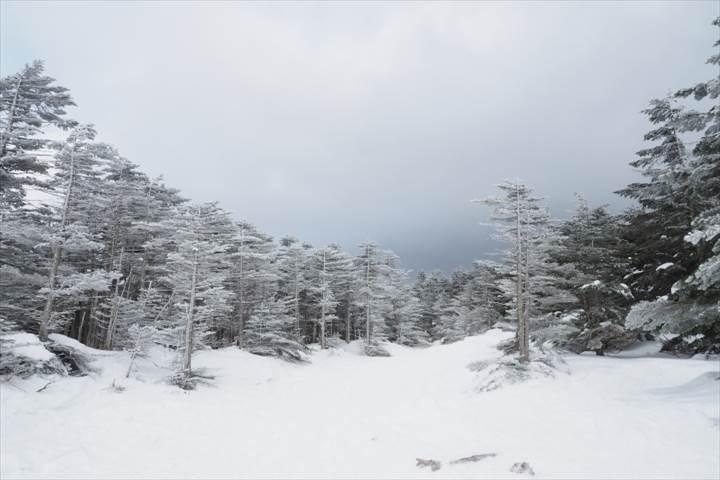 樹氷・霧氷