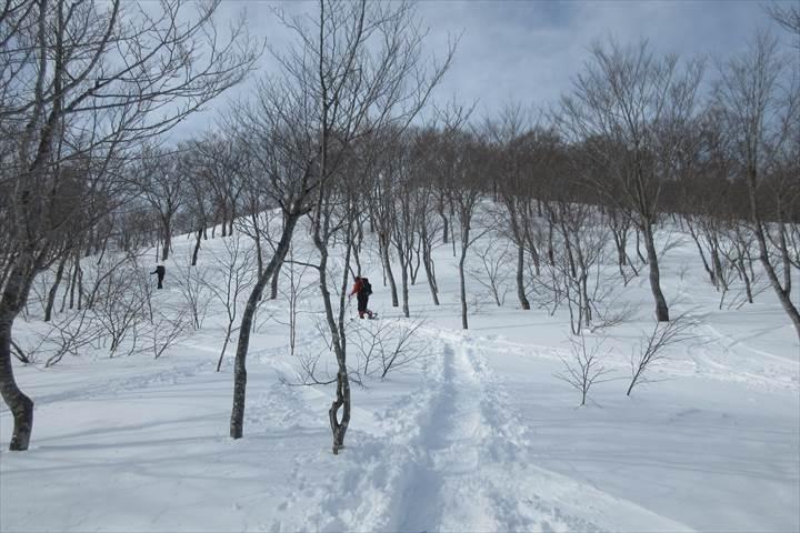 遠見尾根樹林帯